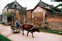 Excursion por la aldea Duong Lam in Hanoi